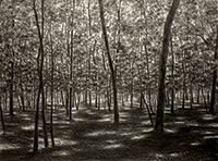 April Gornik, American, b. 1953. Forest Light, 2014. Lithograph on paper, 20 x 27 inches